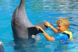 dancing with a dolphin